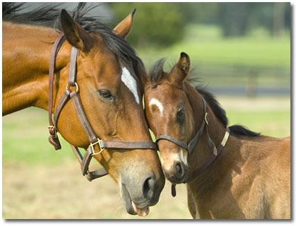 Horse Bedding Wholesale Supply, Woodshaving Bedding, Bedding